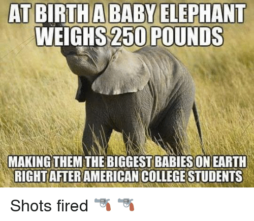Shot Fired: AT BIRTH A BABY ELEPHANT  WEIGHS 250 POUNDS  MAKING  THEM THE BIGGESTBABIESONEARTH  RIGHT AFTER  COLLEGESTUDENTS Shots fired 🔫 🔫