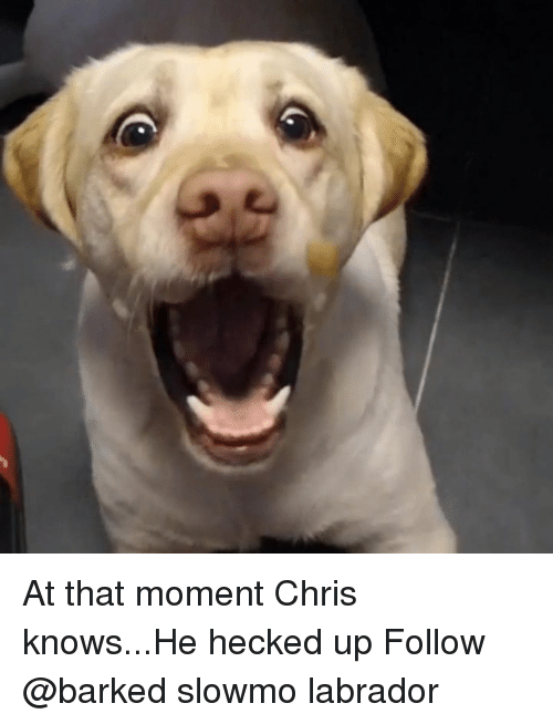 Memes, 🤖, and Labrador: At that moment Chris knows...He hecked up Follow @barked slowmo labrador