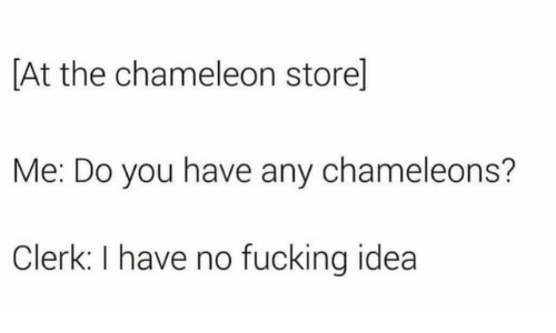 Fucking, Chameleon, and Idea: [At the chameleon store]  Me: Do you have any chameleons?  Clerk: I have no fucking idea
