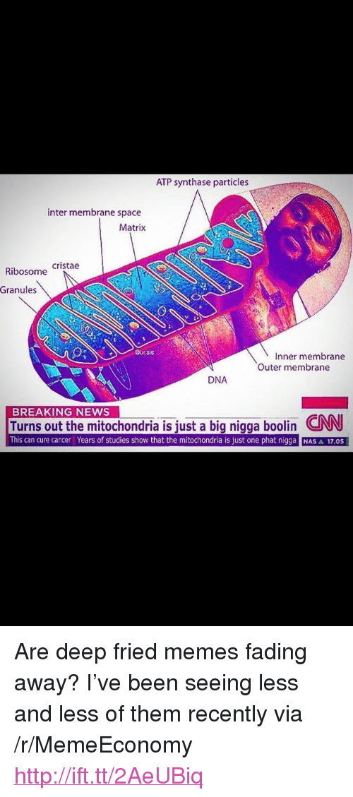 """atp: ATP synthase particles  inter membrane space  Matrix  Ribosome Cristae  Granules  Dur.sis  Inner membrane  Outer membrane  DNA  BREAKING NEWS  Turns out the mitochondria is iust a big nigga boolin CNN  This can cure cancer Years of studies show that the mitochondria is just one phat nigga NAS A 17.0S <p>Are deep fried memes fading away? I've been seeing less and less of them recently via /r/MemeEconomy <a href=""""http://ift.tt/2AeUBiq"""">http://ift.tt/2AeUBiq</a></p>"""