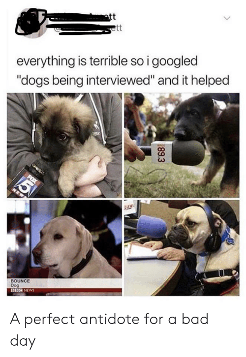 """Antidote, Bad, and Bad Day: att  ett  everything is terrible so i googled  """"dogs being interviewed"""" and it helped  5  FOX  NEW  BOUNCE  Dog  DOC NEWS  89.3 A perfect antidote for a bad day"""