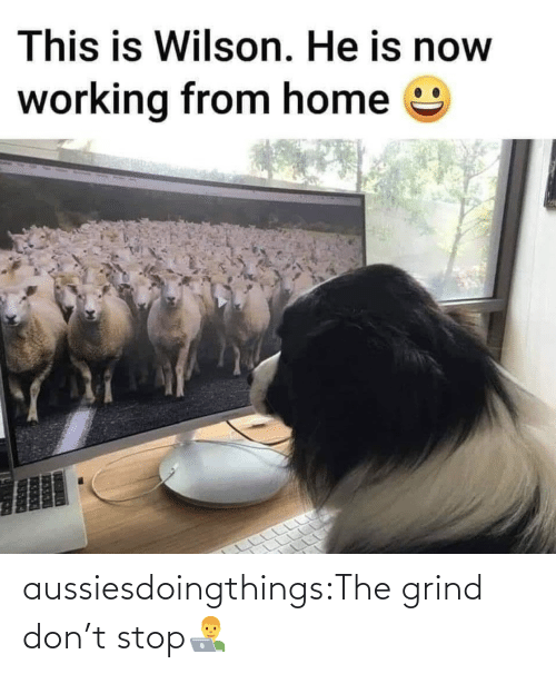 stop: aussiesdoingthings:The grind don't stop👨💻