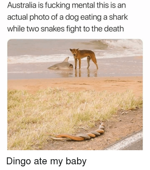 Fucking, Memes, and Shark: Australia is fucking mental this is an  actual photo of a dog eating a shark  while two snakes fight to the death Dingo ate my baby