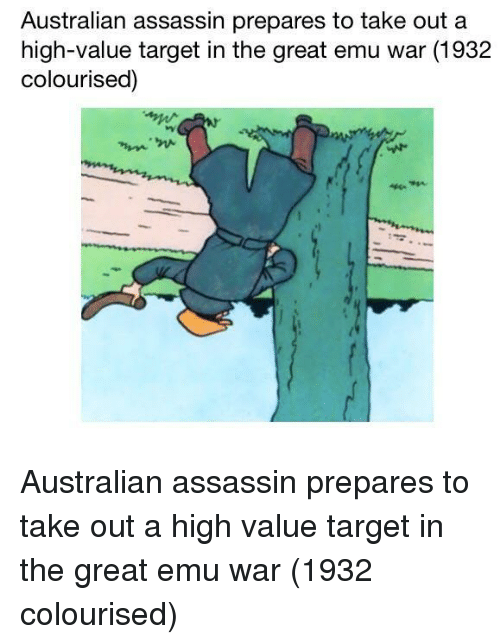emu: Australian assassin prepares to take out a  high-value target in the great emu war (1932  colourised) Australian assassin prepares to take out a high value target in the great emu war (1932 colourised)