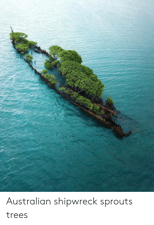 Sprouts, Trees, and Australian: Australian shipwreck sprouts trees