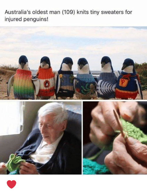 Memes, Penguins, and 🤖: Australia's oldest man (109) knits tiny sweaters for  injured penguins! ❤️