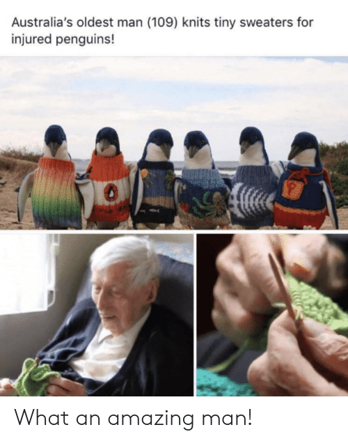 Penguins, Amazing, and Tiny: Australia's oldest man (109) knits tiny sweaters for  injured penguins! What an amazing man!
