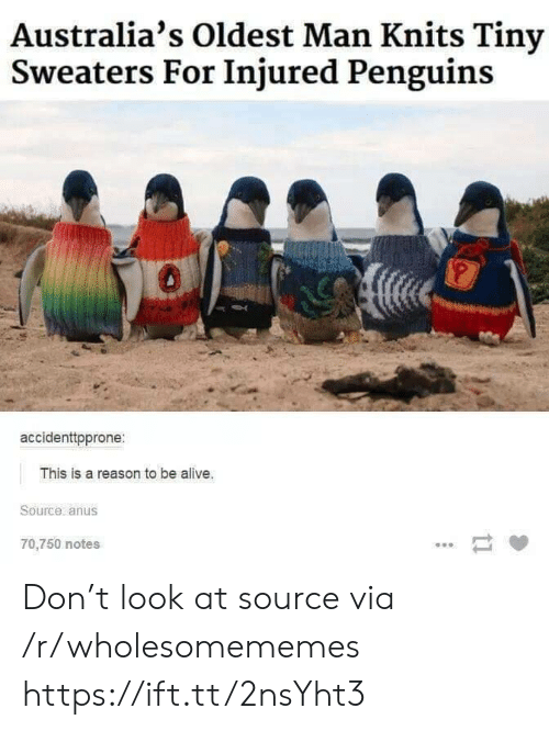 injured: Australia's Oldest Man Knits Tiny  Sweaters For Injured Penguins  accidenttpprone:  This is a reason to be alive.  Source anus  70,750 notes  ti Don't look at source via /r/wholesomememes https://ift.tt/2nsYht3