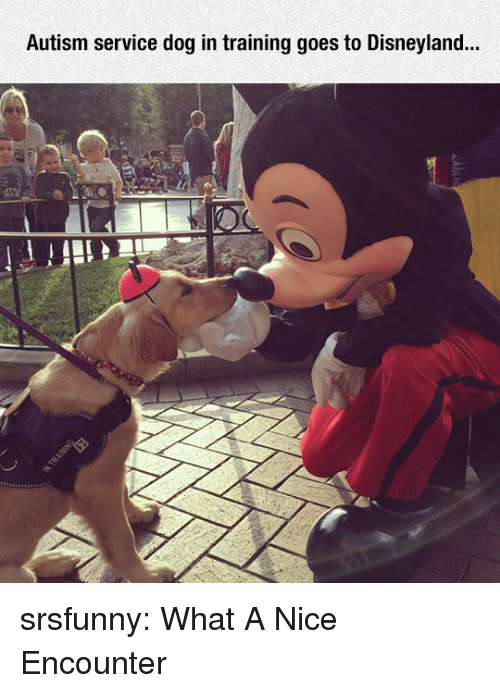 Disneyland, Tumblr, and Autism: Autism service dog in training goes to Disneyland... srsfunny:  What A Nice Encounter