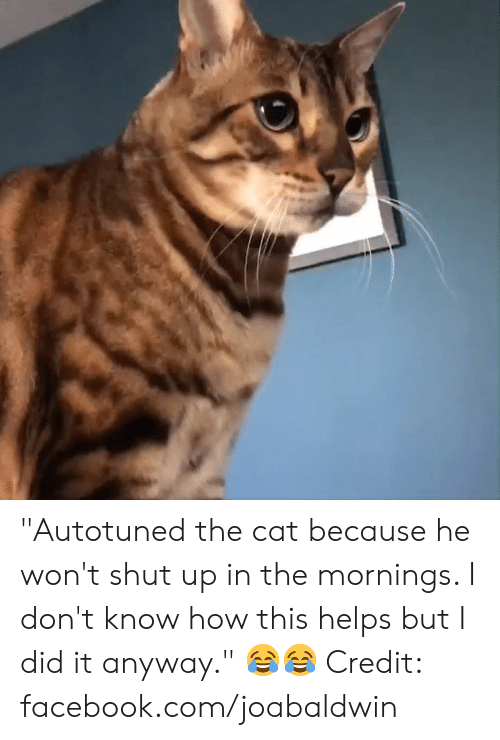 """Mornings: """"Autotuned the cat because he won't shut up in the mornings. I don't know how this helps but I did it anyway."""" 😂😂  Credit: facebook.com/joabaldwin"""