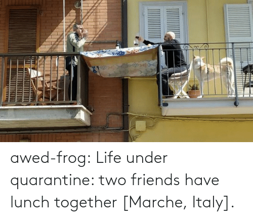 frog: awed-frog:  Life under quarantine: two friends have lunch together [Marche, Italy].