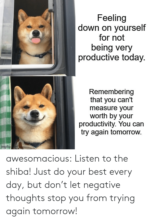 thoughts: awesomacious:  Listen to the shiba! Just do your best every day, but don't let negative thoughts stop you from trying again tomorrow!