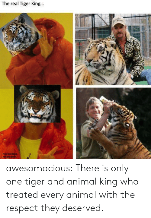 Only One: awesomacious:  There is only one tiger and animal king who treated every animal with the respect they deserved.