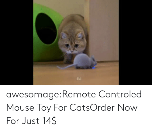 Cats, Tumblr, and Control: awesomage:Remote Controled Mouse Toy For CatsOrder Now For Just 14$