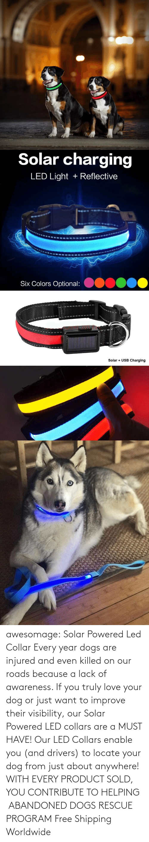 Dogs: awesomage: Solar Powered Led Collar   Every year dogs are injured and even killed on our roads because a lack of awareness. If you truly love your dog or just want to improve their visibility, our Solar Powered LED collars are a MUST HAVE!   Our LED Collars enable you (and drivers) to locate your dog from just about anywhere!     WITH EVERY PRODUCT SOLD, YOU CONTRIBUTE TO HELPING  ABANDONED DOGS RESCUE PROGRAM     Free Shipping Worldwide