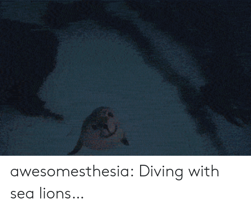 Tumblr, Blog, and Lions: awesomesthesia:  Diving with sea lions…
