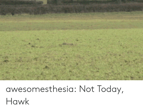 Tumblr, Blog, and Today: awesomesthesia:  Not Today, Hawk