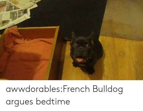 Target, Tumblr, and Blog: awwdorables:French Bulldog argues bedtime