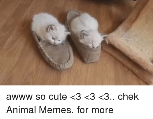 Animals, Anime, and Cute: awww so cute <3 <3 <3.. chek Animal Memes. for more