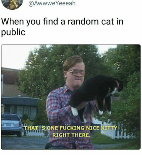 randomness: @AwwweYeeeah  When you find a random cat in  public  THATTS ONE FUCKING NICE KITTY  RIGHT THERE