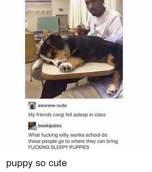 Corgi, Cute, and Friends: awwww-cute  My friends corgi fell asleep in class  bookipsie  What fucking willy wonka school do  these people go to where they can bring  FUCKING SLEEPY PUPPIES puppy so cute