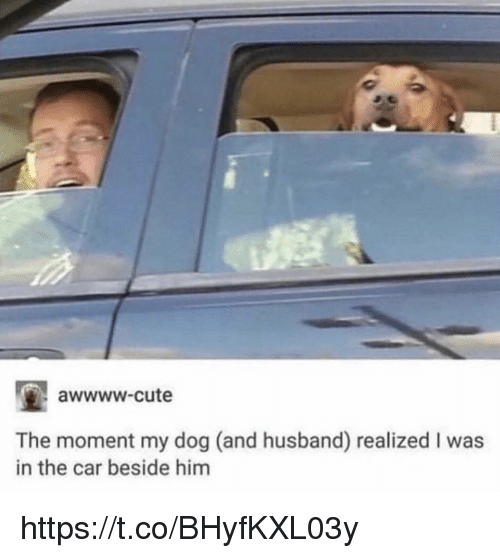 Awwww Cute: awwww-cute  The moment my dog (and husband) realized I was  in the car beside him https://t.co/BHyfKXL03y