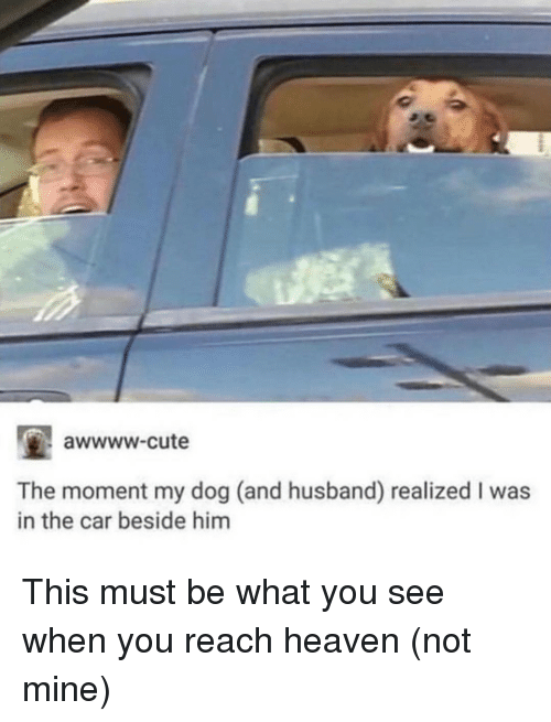 Awwww Cute: awwww-cute  The moment my dog (and husband) realized I was  in the car beside him This must be what you see when you reach heaven (not mine)
