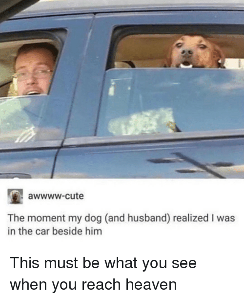 Awwww Cute: awwww-cute  The moment my dog (and husband) realized I was  in the car beside him This must be what you see when you reach heaven