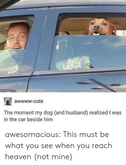 Awwww Cute: awwww.cute  The moment my dog (and husband) realized I was  in the car beside him awesomacious:  This must be what you see when you reach heaven (not mine)