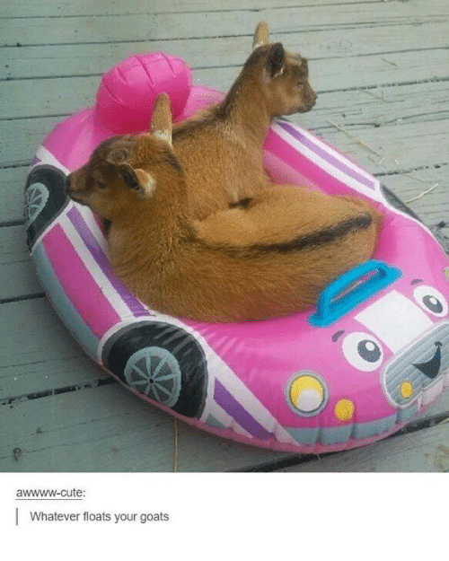 Cute, Dank, and Goat: awwww-cute:  Whatever floats your goats