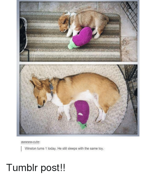 tumblr post: awwww-cute:  Winston turns 1 today. He still sleeps with the same toy. Tumblr post!!