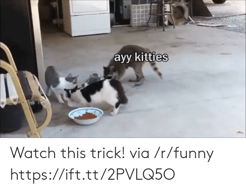Kitties: ayy kitties Watch this trick! via /r/funny https://ift.tt/2PVLQ5O