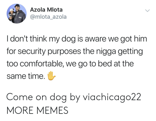Comfortable, Dank, and Memes: Azola Mlota  @mlota_azola  Idon't think my dog is aware we got him  for security purposes the nigga getting  too comfortable, we go to bed at the  same time. Come on dog by viachicago22 MORE MEMES