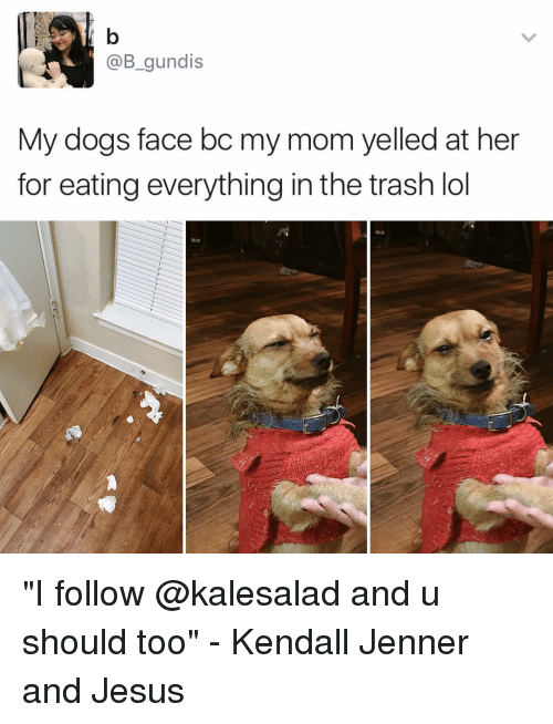 """Dog Faces: @B gundis  My dogs face bc my mom yelled at her  for eating everything in the trash lol """"I follow @kalesalad and u should too"""" - Kendall Jenner and Jesus"""