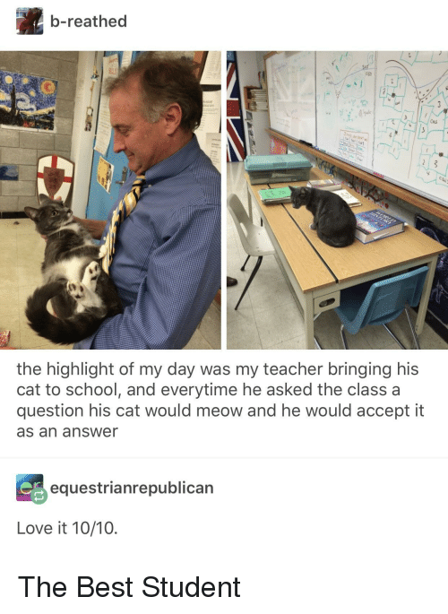 Love, School, and Teacher: b-reathed  Caus  the highlight of my day was my teacher bringing his  cat to school, and everytime he asked the class a  question his cat would meow and he would accept it  as an answer  equestrianrepublican  Love it 10/10. The Best Student