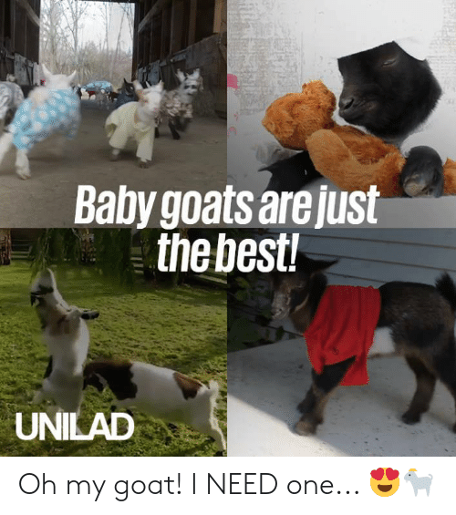 Dank, Goat, and Baby: Baby goats are just  thebest  UNILAD Oh my goat! I NEED one... 😍🐐