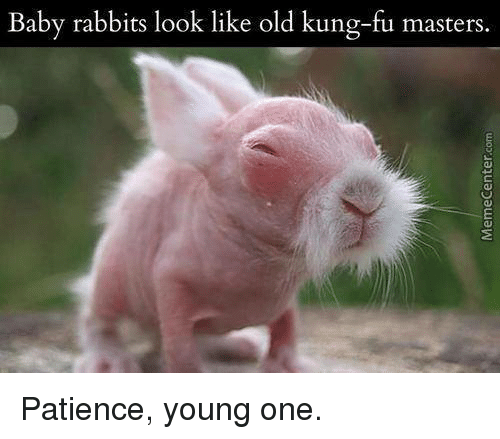 kung fu master: Baby rabbits look like old kung-fu masters. Patience, young one.