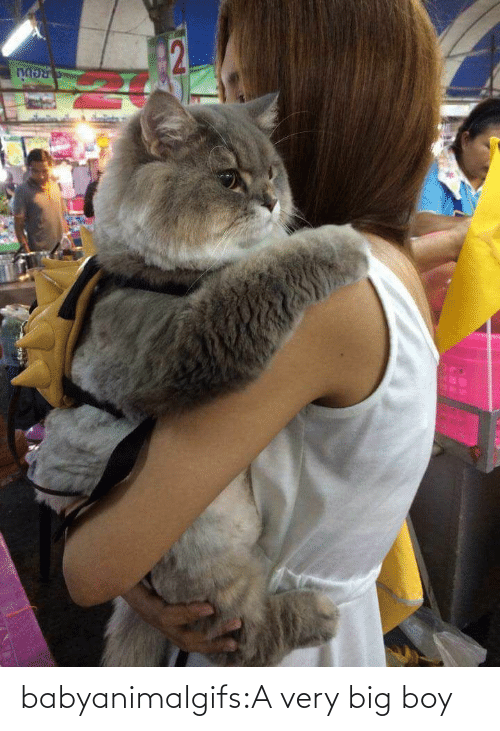 Very: babyanimalgifs:A very big boy