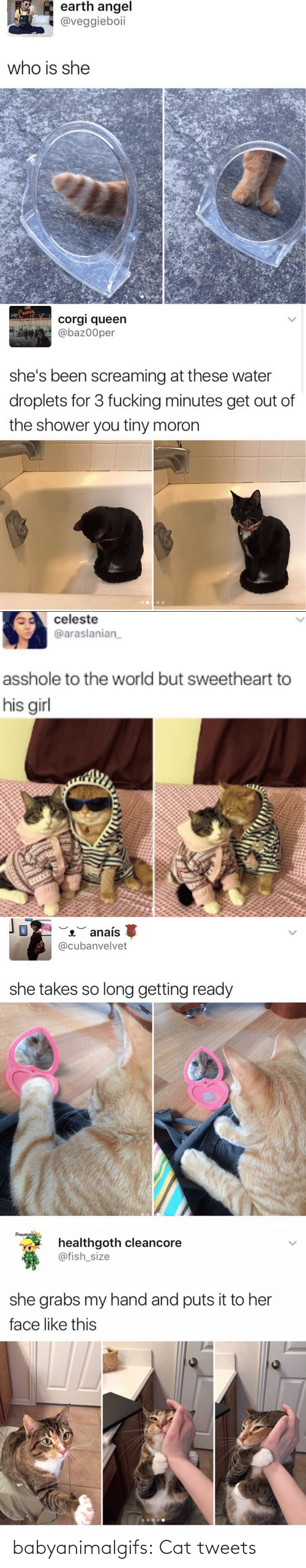 Tweets: babyanimalgifs: Cat tweets