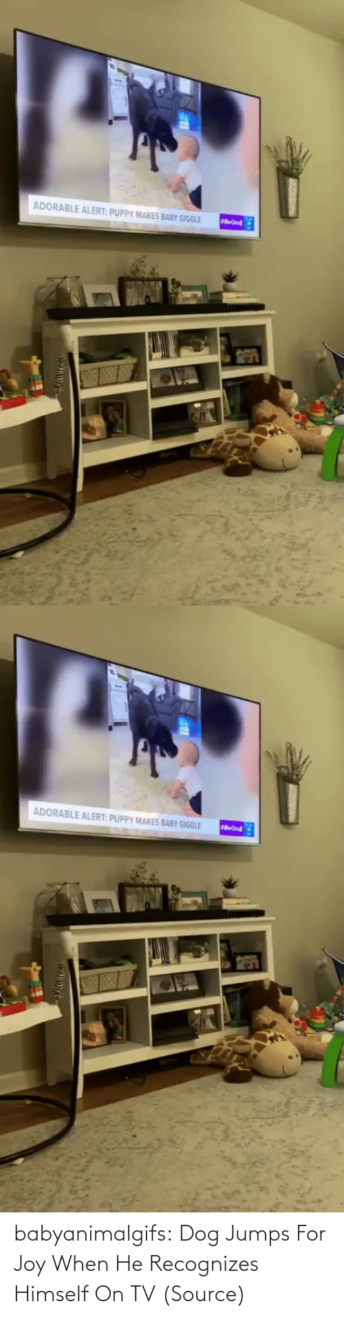 Dog: babyanimalgifs:  Dog Jumps For Joy When He Recognizes Himself On TV (Source)