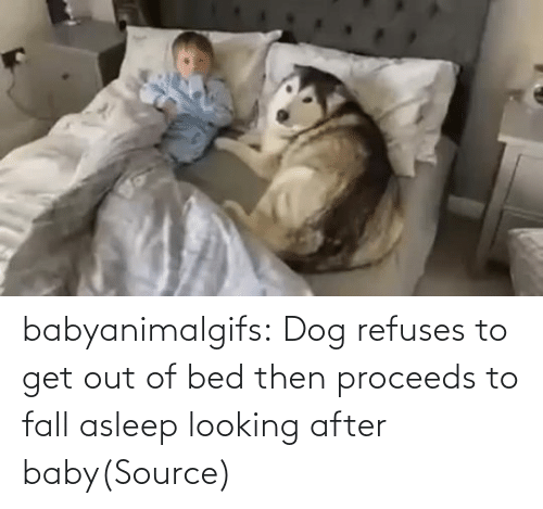 Dog: babyanimalgifs:  Dog refuses to get out of bed then proceeds to fall asleep looking after baby(Source)