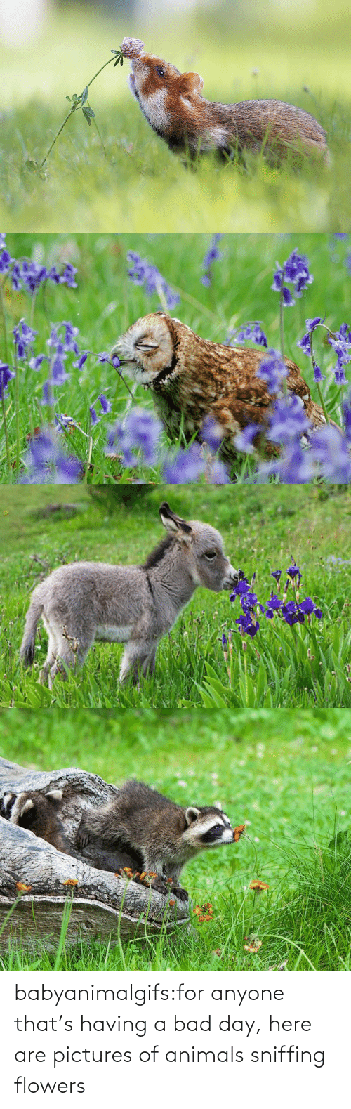 Pictures: babyanimalgifs:for anyone that's having a bad day, here are pictures of animals sniffing flowers