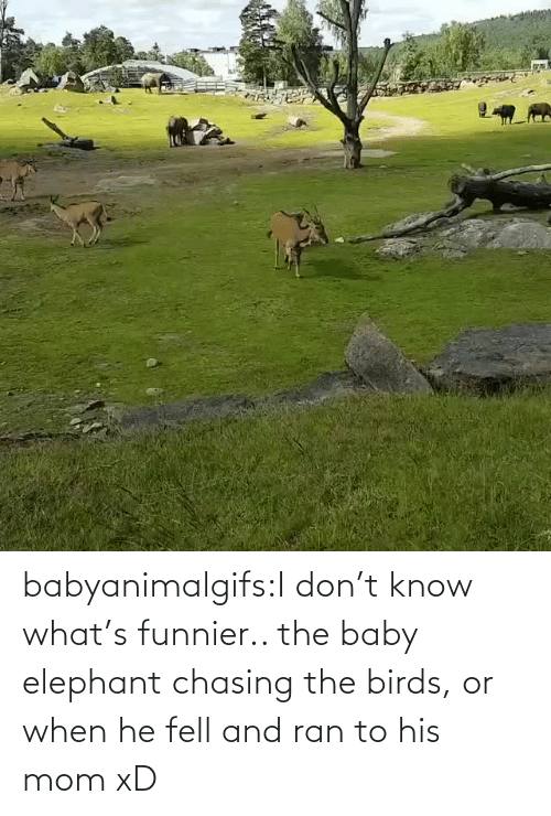 I Dont: babyanimalgifs:I don't know what's funnier.. the baby elephant chasing the birds, or when he fell and ran to his mom xD