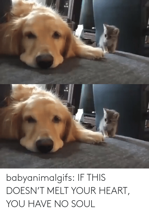 Your: babyanimalgifs:  IF THIS DOESN'T MELT YOUR HEART, YOU HAVE NO SOUL