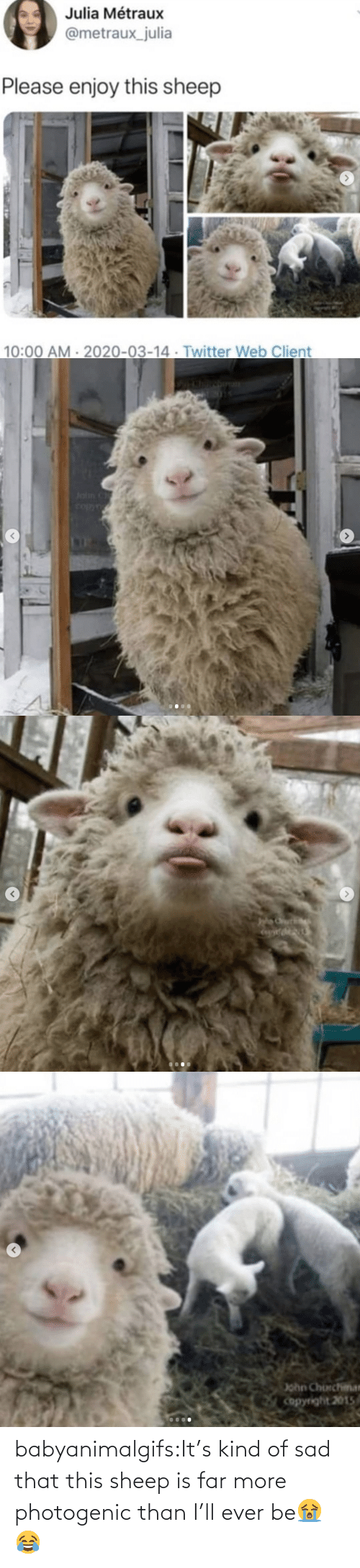 Kind: babyanimalgifs:It's kind of sad that this sheep is far more photogenic than I'll ever be😭😂