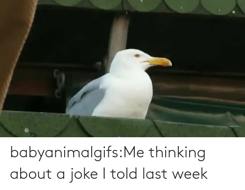 I Told: babyanimalgifs:Me thinking about a joke I told last week