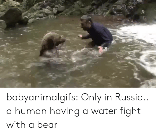 Tumblr, Bear, and Blog: babyanimalgifs: Only in Russia.. a human having a water fight with a bear