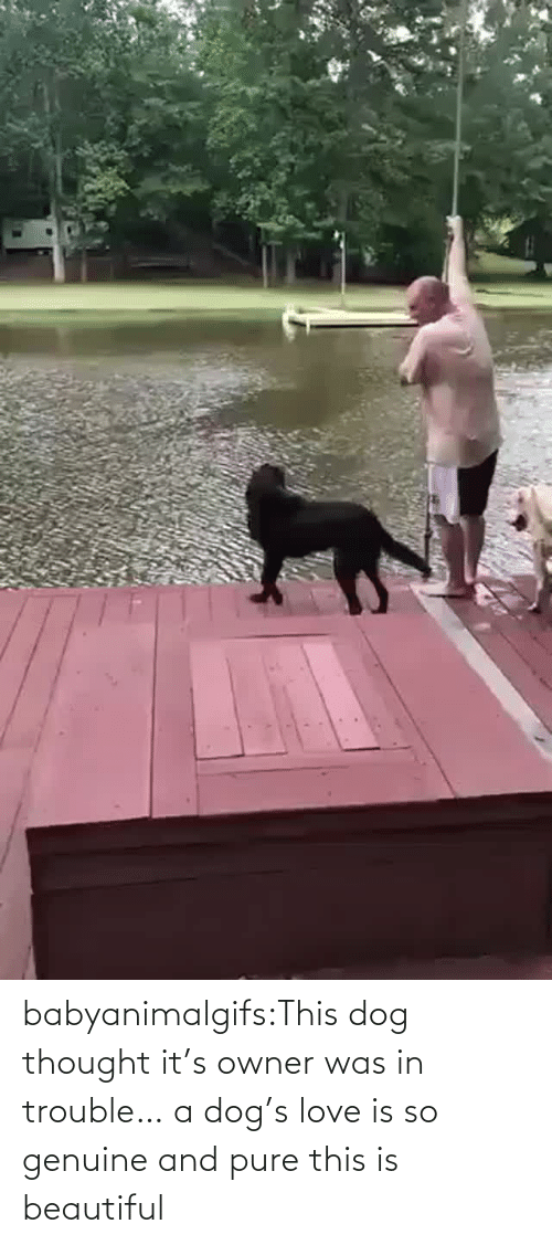 Love Is: babyanimalgifs:This dog thought it's owner was in trouble… a dog's love is so genuine and pure this is beautiful