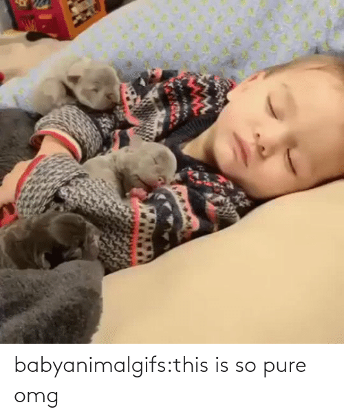 omg: babyanimalgifs:this is so pure omg