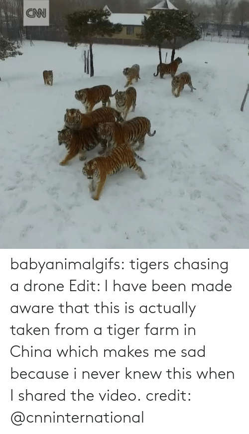 Actually: babyanimalgifs: tigers chasing a drone Edit: I have been made aware that this is actually taken from a tiger farm in China which makes me sad because i never knew this when I shared the video. credit: @cnninternational